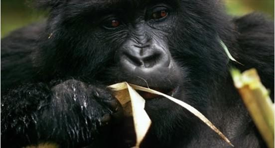 uganda19