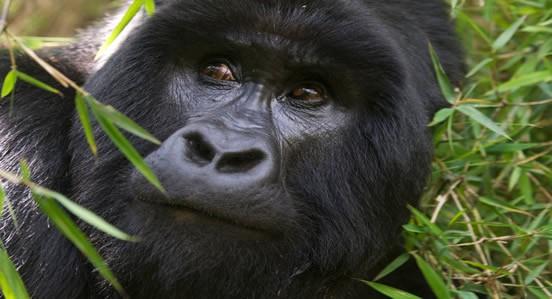 uganda23