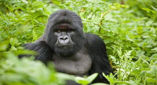 rwanda14