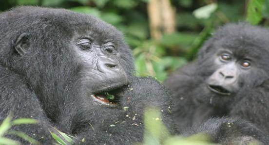 rwanda8